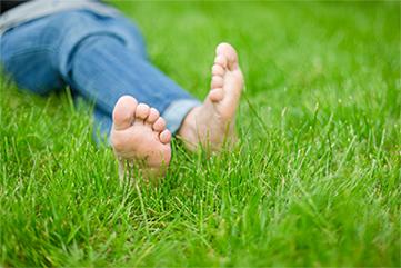 Greener, Weed-Free Lawn