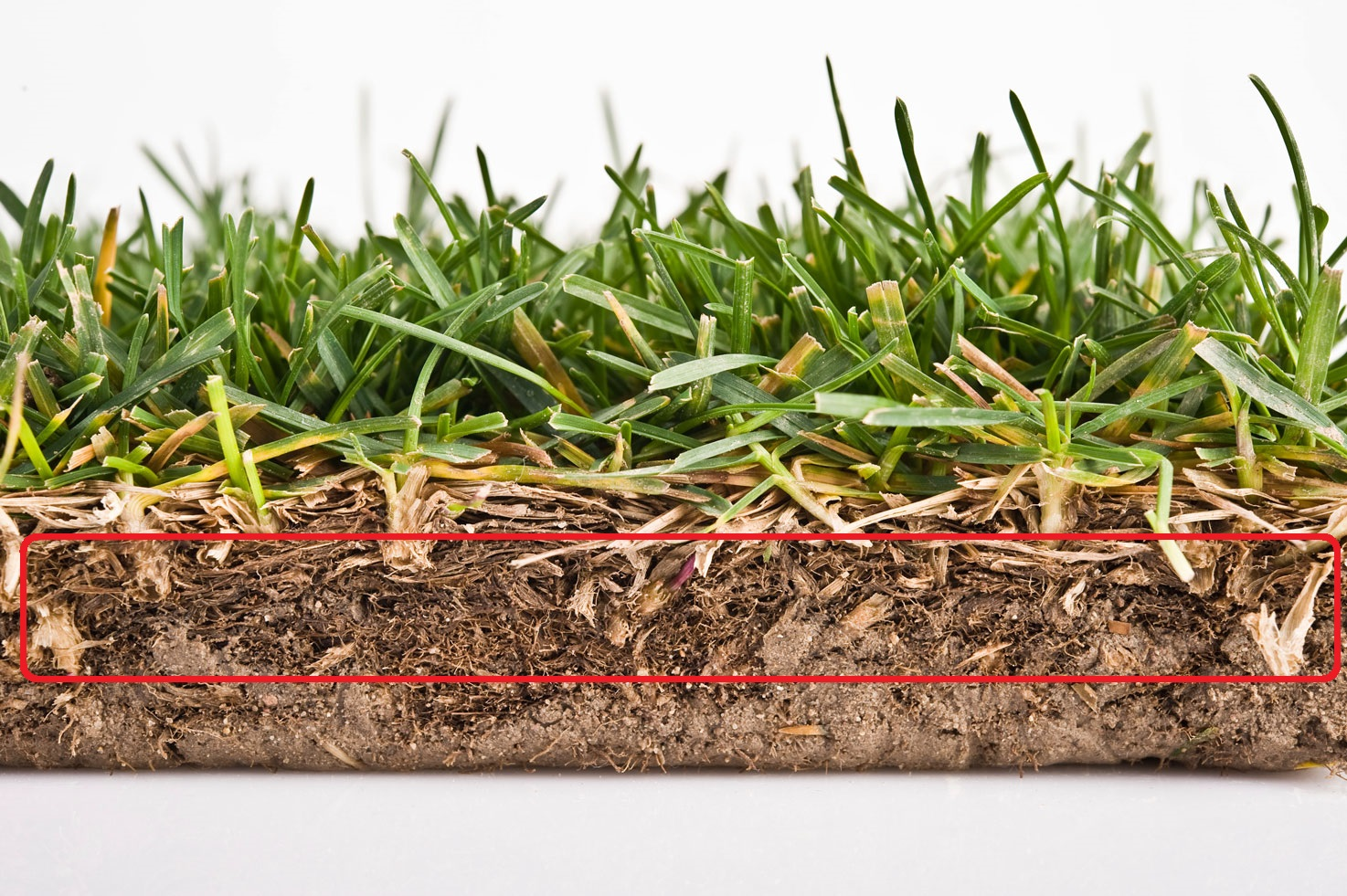 best time to dethatch lawn Part - 15:  best time to dethatch lawn nice design