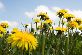 Killing Weeds – It's Not What You Think