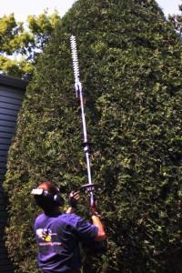 shrub_pruning