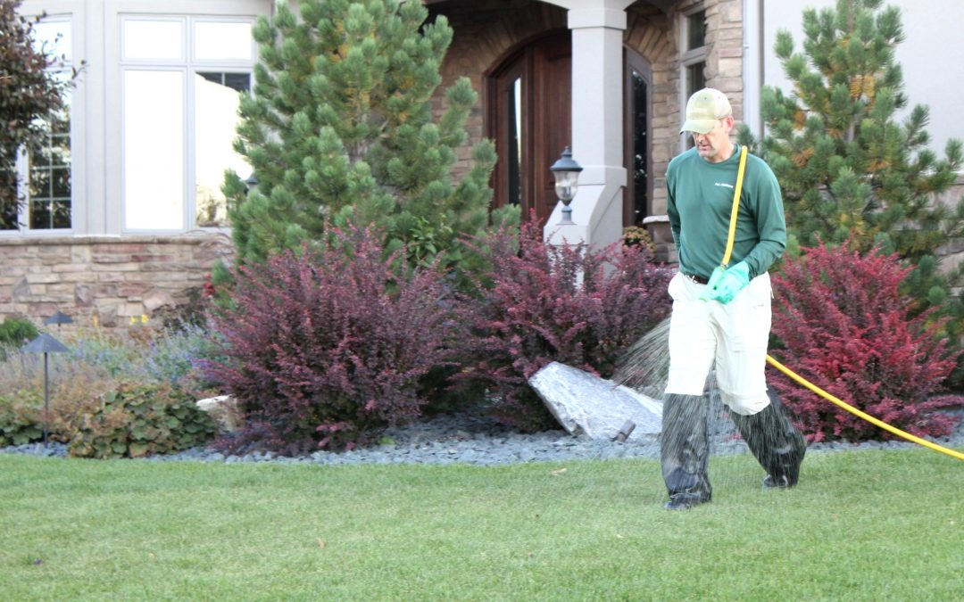 Lawn Treatments – Liquid vs. Granular